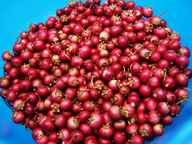 From Farm To Turkey, Here Is The Journey of The Cranberry